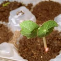 casafacilefelice.org, pre germinazione,