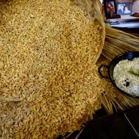 riso, arros,oryza sativa japonica,www.casafacilefelice.org