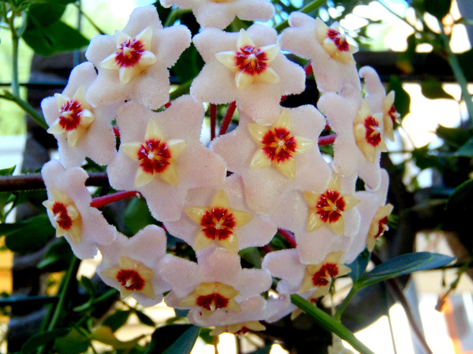 Popolare Casa facile felice | fiore di cera,www.casafacilefelice.org VO13