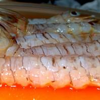 cicale di mare, canocchie