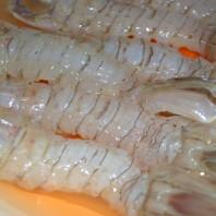 Cicale di mare, canocchia, squilla mantis