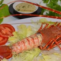 aragosta,lobster,langosta